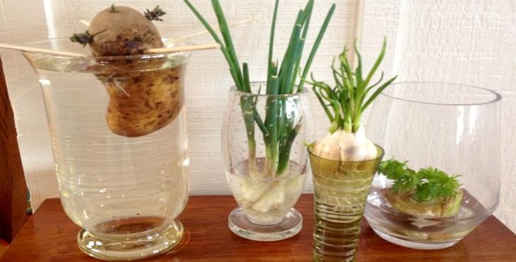 plantas-cultivadas-na-agua-2