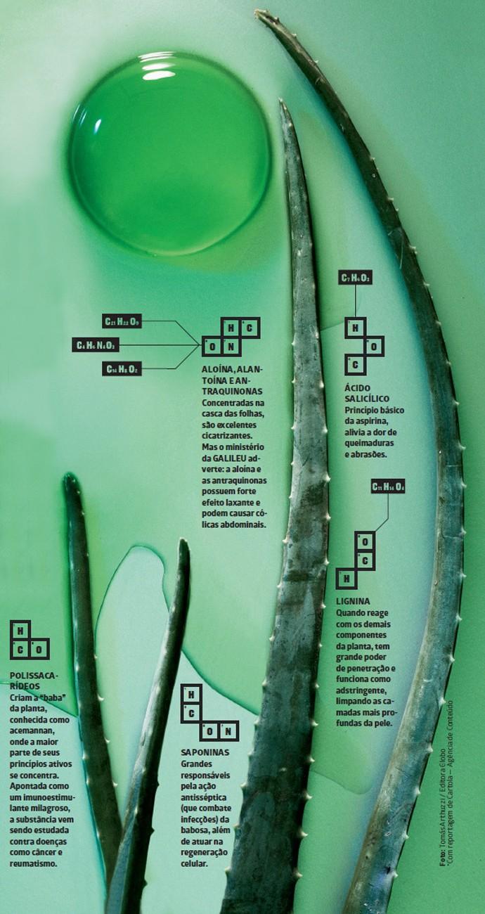 Tudo o que você precisa saber sobre a babosa, a 'planta da imortalidade'