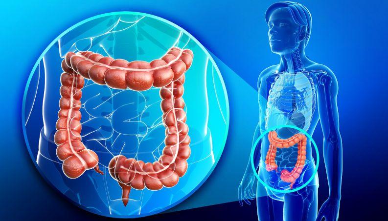 Cuide bem do seu intestino